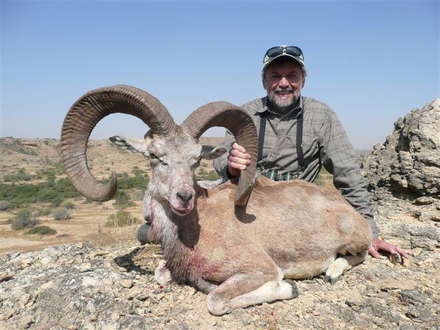 Blanford Urial hunting in Pakistan