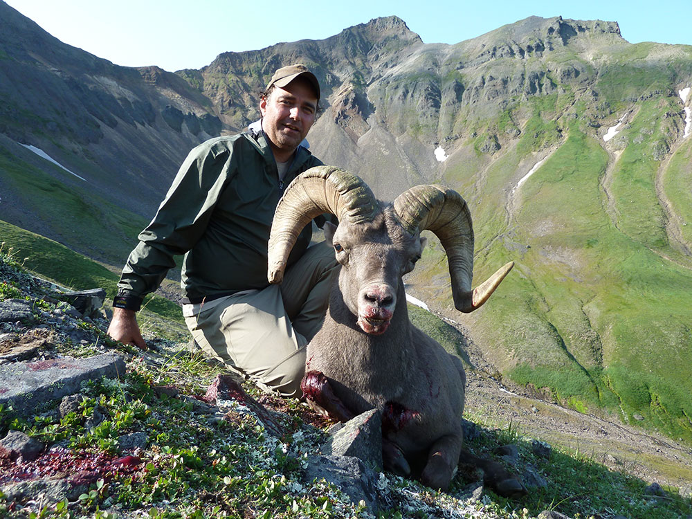 Kamchatka Bighorn Sheep