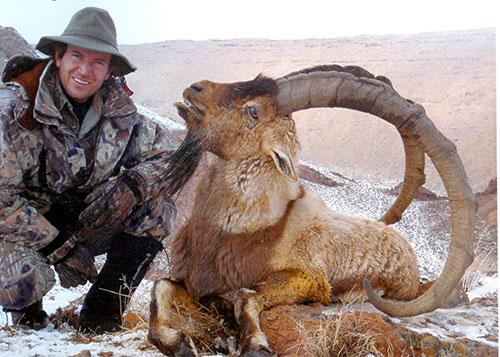 Persian-Ibex