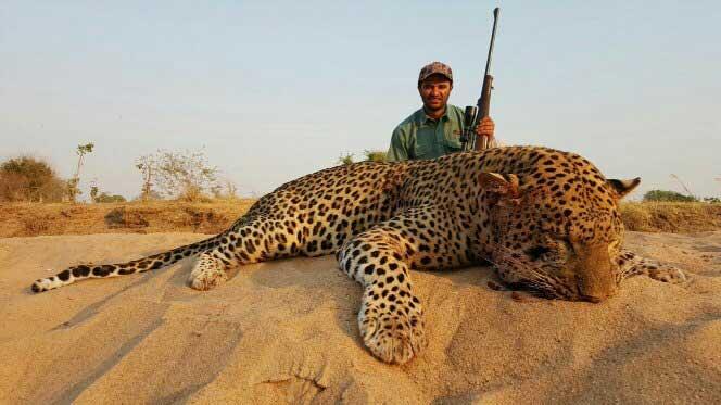 mvu-leopard-20